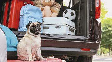 Sticker-Sarkom kommt oft bei Hunden im Mittelmeerraum vor