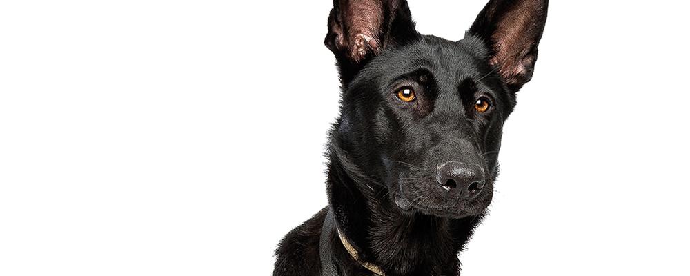 Hunde Mit Epilepsie Bei Krampfanfällen Richtig Reagieren