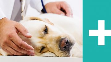 Hund beim Tierarzt Erste Hilfe