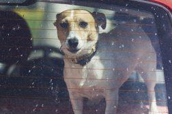 Hund Auto Hitzschlag