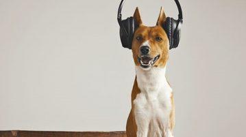 Hund hört Musik
