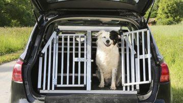 Hundebox für Kofferaum im Auto