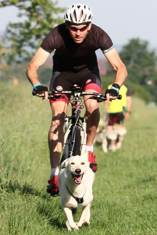 Bikejöring-Wiese