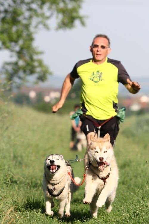 Canicross-zwei-Hunde