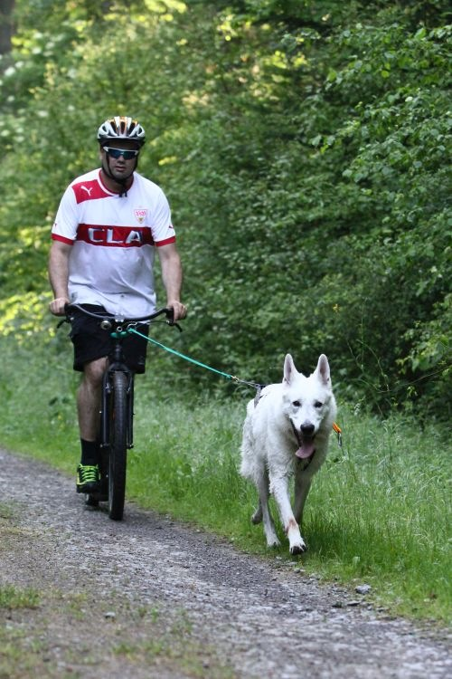Dogscooter-Wald