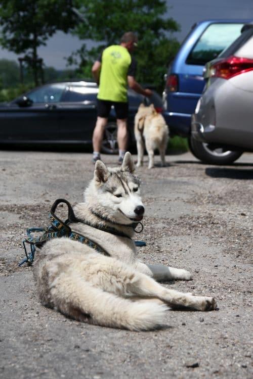 Sport-hund-Pause