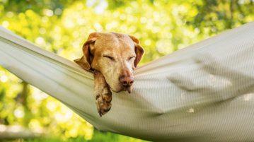 Gesund Sommer hitze Hund