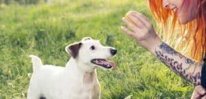 Hund möchte mit Ball spielen