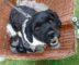 Hund sitzt im Lastenrad
