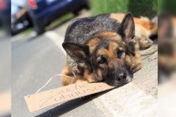 ausgesetzter Hund wartet am Straßenrand