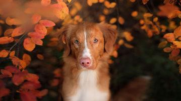 Herbst Archives Der Hund