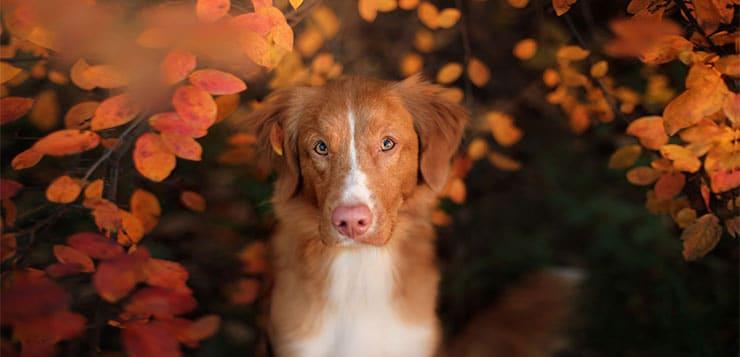 Hunde fotografieren – leicht gemacht!