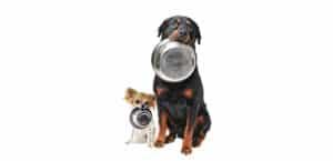 Hund Rasse fütterung rassespezifisch