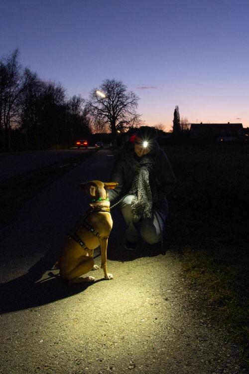 Hundehalterin mit Stirnlampe leuchtet im Dunkeln auf den Weg. Im Lichtkegel sitzt ein Hund.