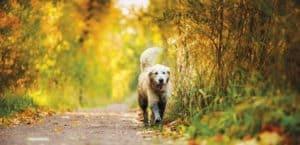 Bewegung im Herbst ist gesund