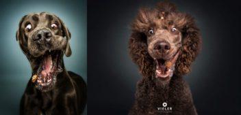 Interview mit Hundefotograf Christian Vieler
