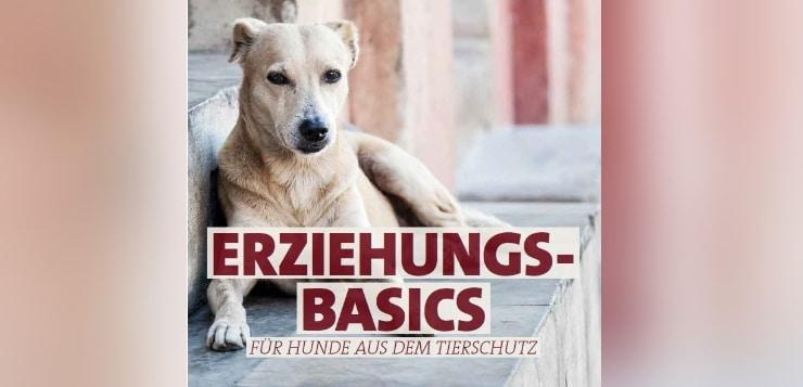 Hunde aus dem Tierschutz sollte man langsam eingewöhnen