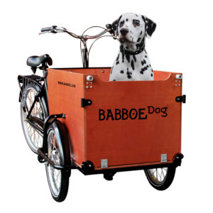 Das Babboe Dog ist ein Lastenrad für Hunde