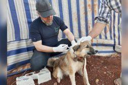 Tierarzt im syrischen Aleppo