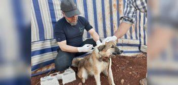 Hilfe für Tiere in Syrien: Aleppos einziger Tierarzt
