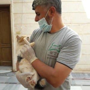 Tierarzt in Syrien behandelt Katze.