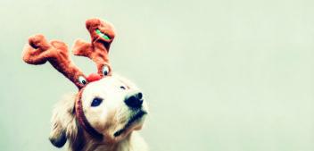 Weihnachtsessen für den Hund: Genuss ohne Reue