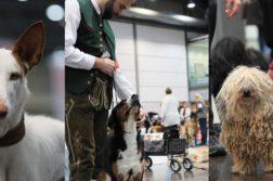 Hunde der World Dog Show 2017