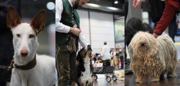 """Die """"World Dog Show 2017"""" in Leipzig"""