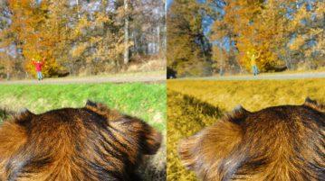Hunde können die Farben Rot und Grün nicht so wahrnehmen wie wir Menschen.