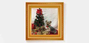 Yorkshire Terrier vor Weihnachtsbaum