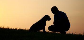 Die 5 häufigsten Missverständnisse zwischen Mensch & Hund