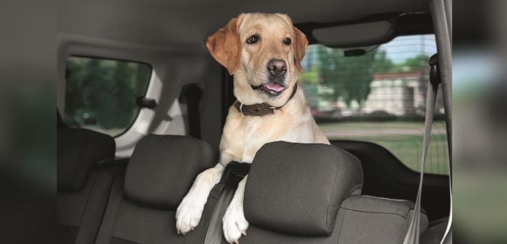 Hund sitzt im Auto