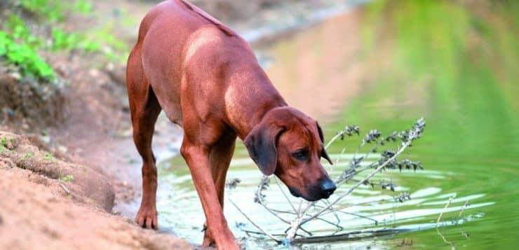 Naturavetal Hundenahrung