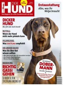 Cover der Ausgabe 5/2018 von DER HUND, brauner Dobermann
