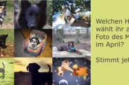 Collage von Hundefotos
