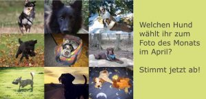 Collage von Hundefotos
