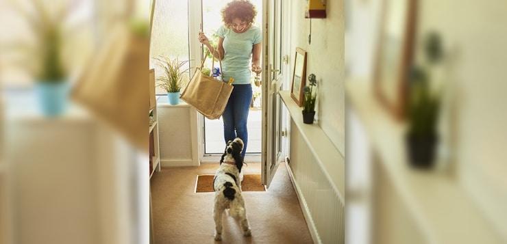 Du fragst, Experten antworten: Was soll ich tun, wenn mein Hund Gäste anspringt?