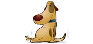 Zeichnung eines Hundes mit dickem Bauch