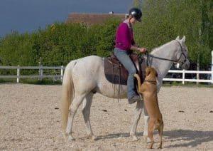 Hund springt an Reiter hoch