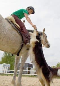 Hund bekommt ein Leckerli von Reiterin
