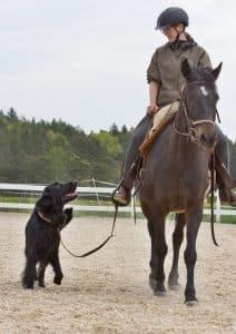 Hund geht neben Pferd