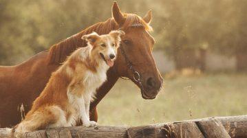 Hund und Pferd gemeinsam