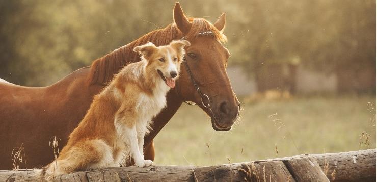 Reiter klagte: Kein Schadensersatz bei Hundeschreck