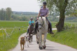 Gruppe von Reitern mit Hunden im Gelände