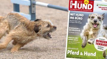 Border Terrier in Ausgabe 7/2018 von DER HUND
