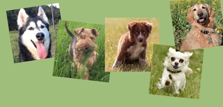 Vier Hundefotos