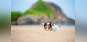 Terrier liegt auf Sand an Strand