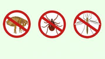Floh, Zecke und Mücke auf verboten-Schildern
