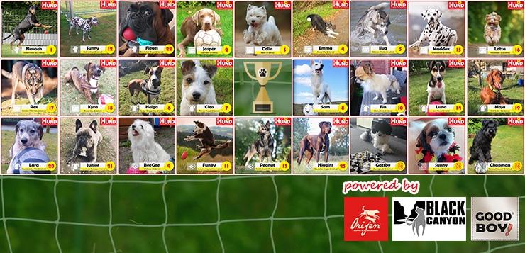 Unser DER HUND-WM-Team steht!