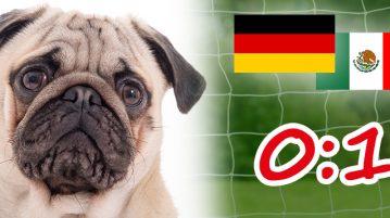 Hunde WM Deutschland Mexiko